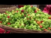 PEPPER PRODUCTION TRAINING VIDEO